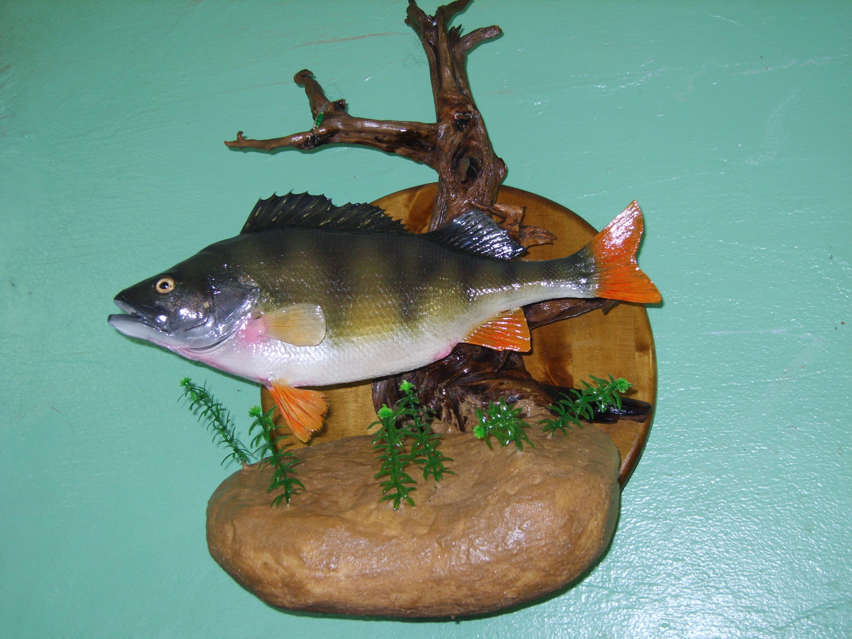 Сделать чучело из рыбы своими руками